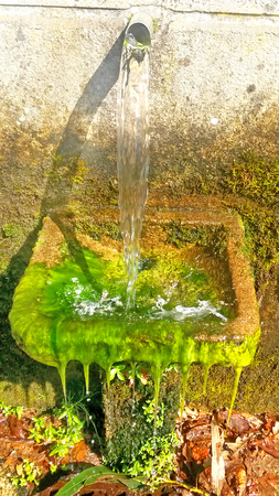 old fountain with alga