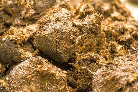 Horse dung, closeup