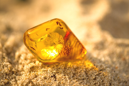 Amber on a beach of the Baltic Sea 版權商用圖片