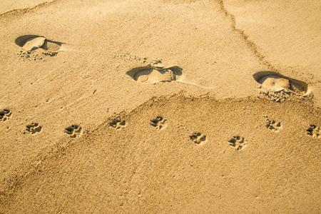 track on a beach, man with dog