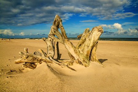 Driftwood at a beach of the Baltic Sea 스톡 콘텐츠
