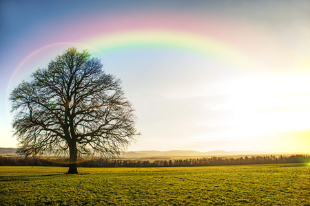 chêne en automne avec arc-en-ciel Banque d'images