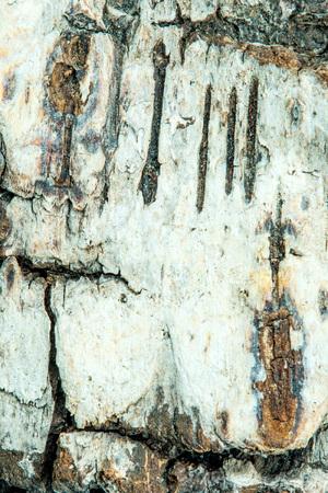 birch bark in a closeup Stock Photo