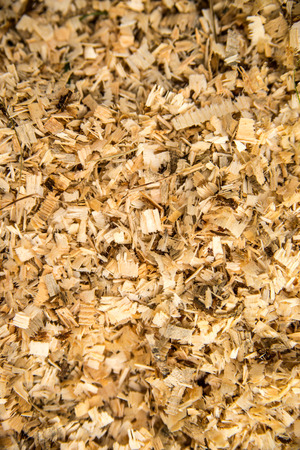 sawdust on a forest floor
