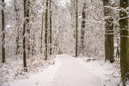 forest with snow in deep winter in Germany Standard-Bild - 117000978