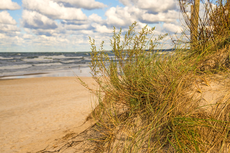 beach of the Baltic sea with beach grass Standard-Bild - 117000982