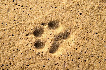 track on a beach, dog Standard-Bild - 119602915