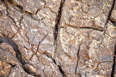 bark of a tree with cracks Standard-Bild - 119602925