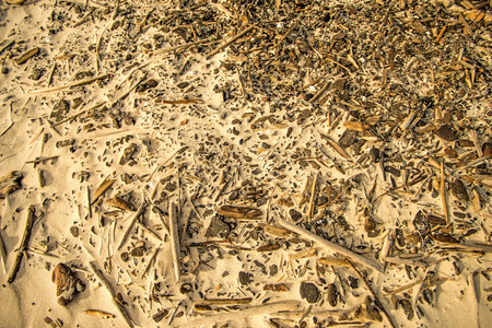 Driftwood at a beach of the Baltic Sea Standard-Bild - 119602947