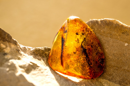 Amber in sun with inclusions Standard-Bild - 119603006