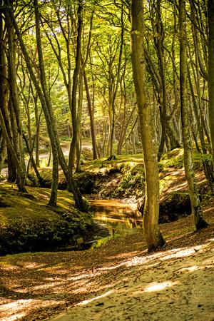 forest with river Orzechowa, Poland, Baltic sea Standard-Bild - 119603070