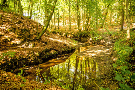 forest with river Orzechowa, Poland, Baltic sea Standard-Bild - 119603071