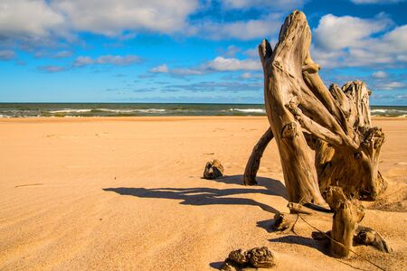 Driftwood at a beach of the Baltic Sea