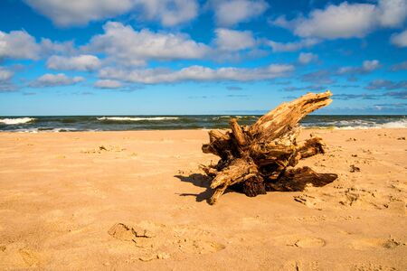 Driftwood at a beach of the Baltic Sea 免版税图像