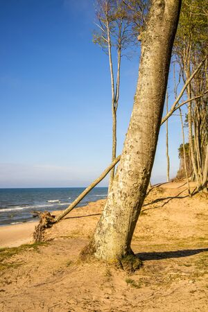 beach of the Baltic Sea in Orzechowo, Poland, dunes with trees