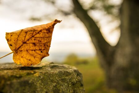 autumnal painted leaf on a castle wall with bald tree in the background  Reklamní fotografie