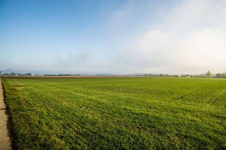 energy plant szarvasi grass in Germany
