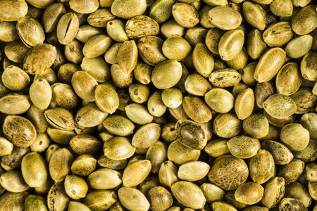 hemp seeds, unpeeled in a closeup