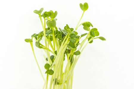 Daikon sprouts in a closeup
