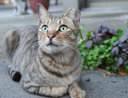 stare cat photo