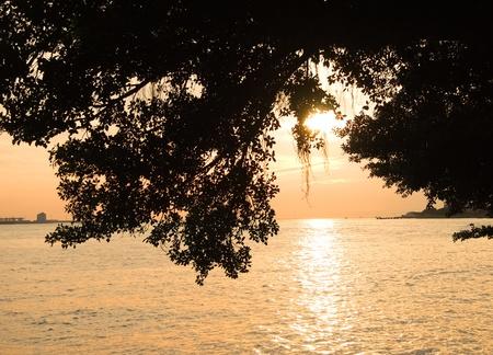 sunset and tree photo