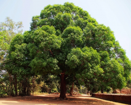 big tree photo