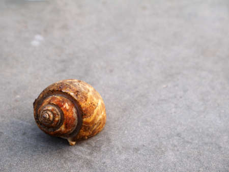 walk board: Small snail walk on board Stock Photo