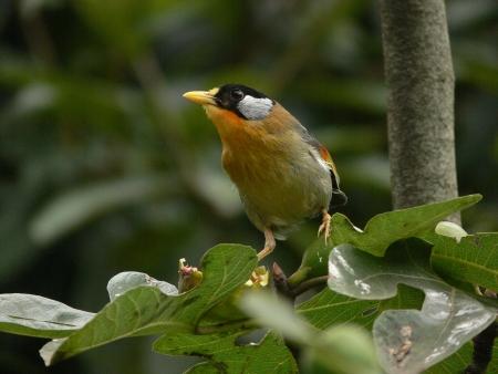 pájaros comen la fruta en las hojas verdes Foto de archivo - 19449019