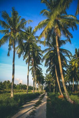 Scenic view of coconut tree in a small village in Selangor Malaysia Stok Fotoğraf