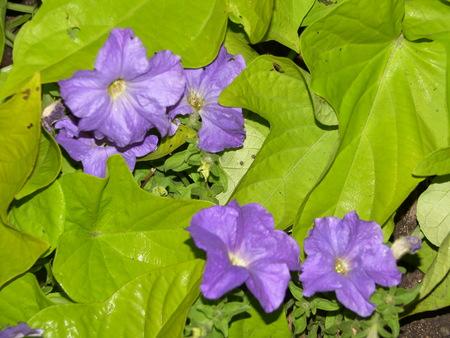 緑豊かな緑の purplr 花 写真素材 - 1477297