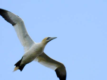 Bird in Fligth Banco de Imagens