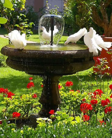 Doves drinking in the fountain