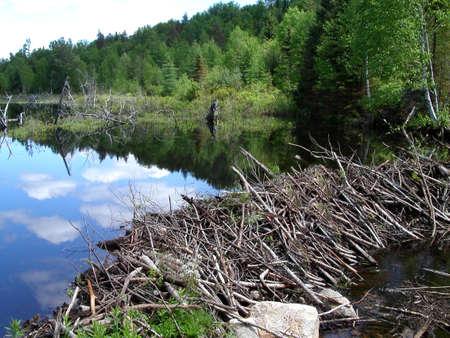 Dam of beaver Stok Fotoğraf