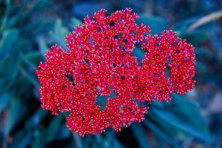 exotic cactus flower