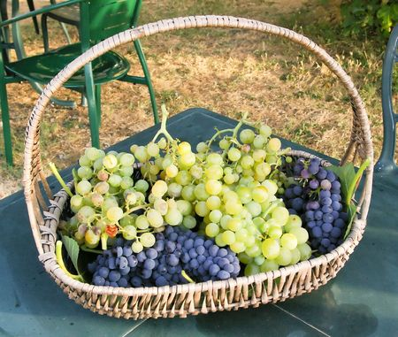 basket of grapes Stock Photo