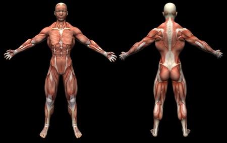 3D render human anatomy  muscles female  版權商用圖片