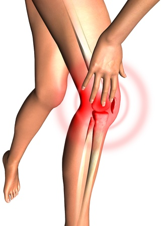 Leg, health 3D render photo