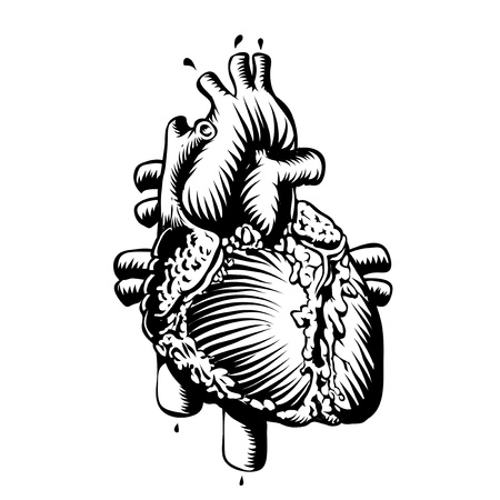 anatomy heart Stock Vector - 17900744