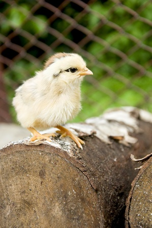 ferm: little nestling on a block