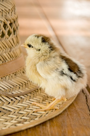 ferm: little nestling on a hat