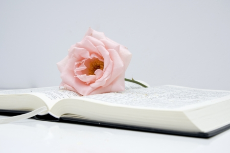 biblia abierta: rosa rosa en una Biblia abierta Foto de archivo