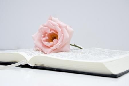 bible ouverte: rose sur une Bible ouverte