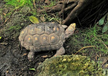 herpetology: turtle, tortoise