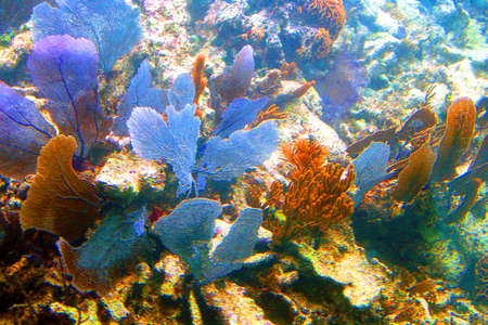 Coral reef in Cancun, Mexico