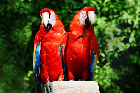 A pair of parrots on a perch