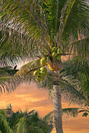 a coconut palm tree with sunset Stock Photo - 3992400