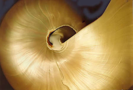 the pearlescent and lovely colors of a nautilus shell