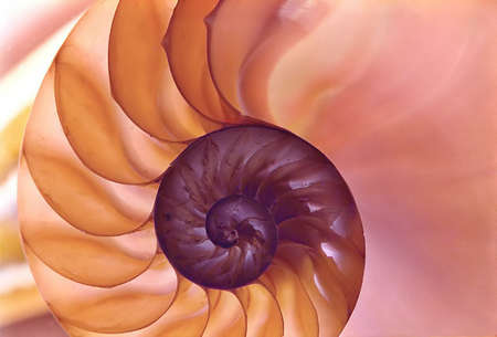 the pearlescent and lovely colors of a nautilus shell photo