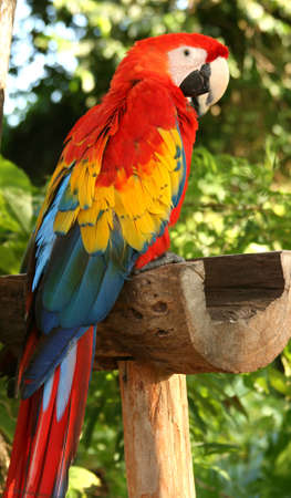 tropical parrots at feeder in Mexico Stock Photo - 4064884