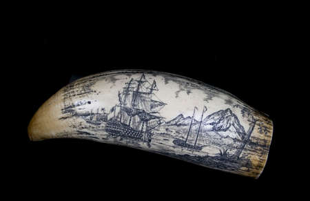 a scrimshaw-carved walrus tusk on a black background
